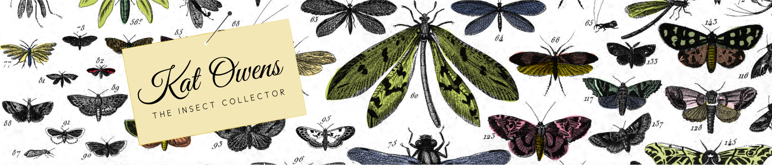 Katharine Owens: The Insect Collector