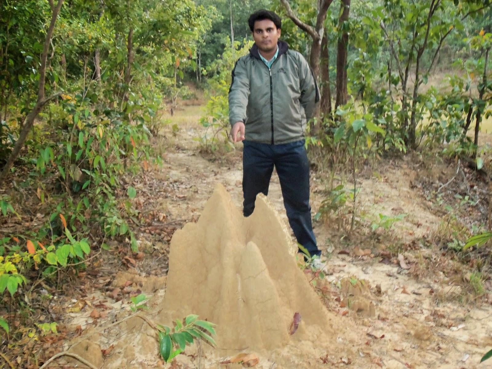 A termite's mound in the jungle