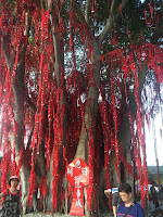 Wishing Tree | Pantai Redang, Sekinchan