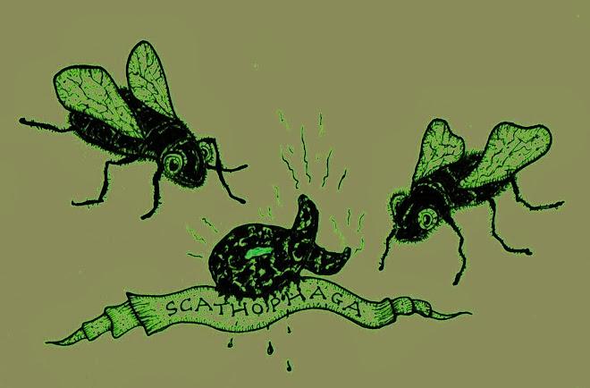 Scathophaga