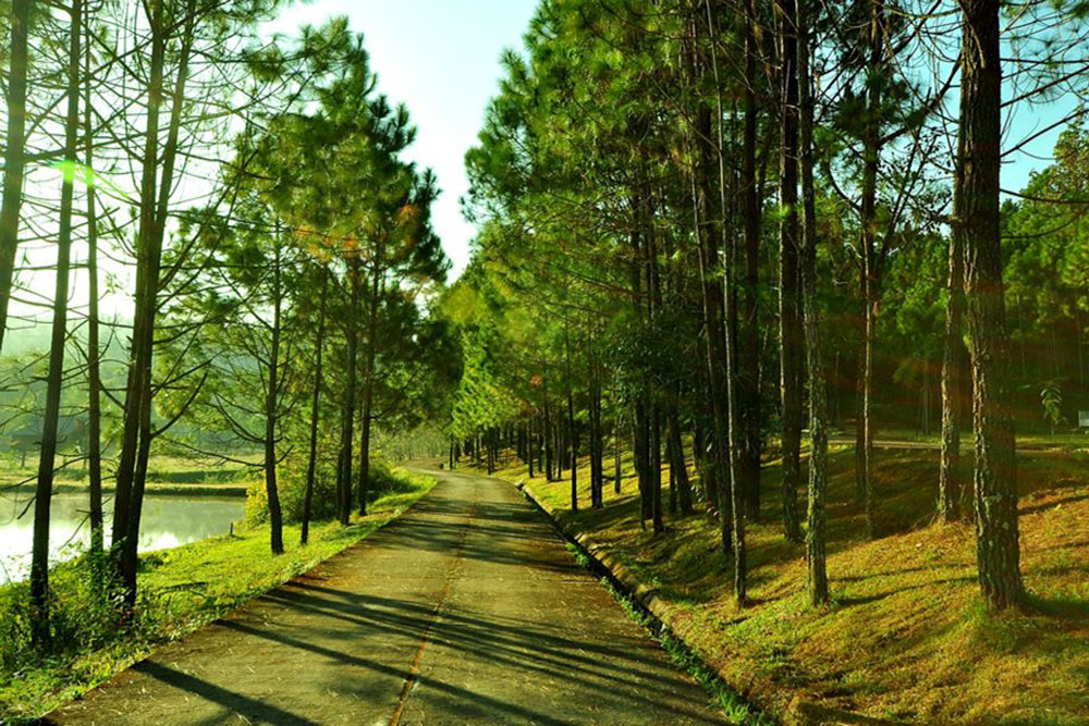 Dream Destination Thailand : Ban Wat Chan Pine Forest