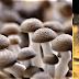 Nachgekocht: Mushroom jelly with mushroom cream à la Heston Blumenthal
