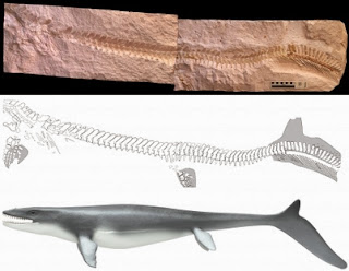 Prehistoric lizard surprises with fish tail
