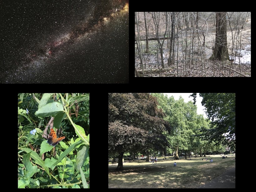 Seasonal Collage