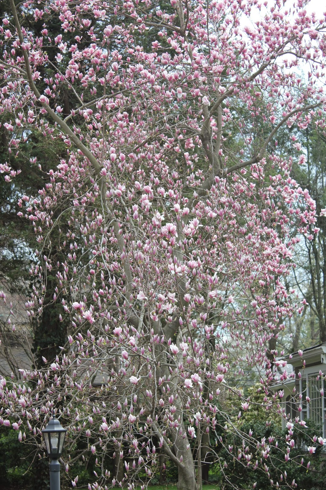 Gardening And Gardens Spring Flowering Trees