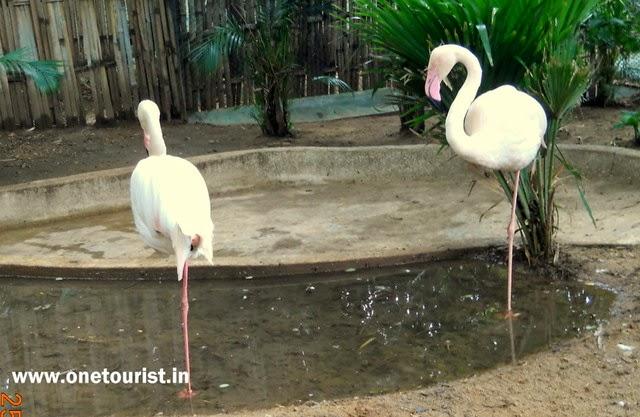Zoo in mysore , timing , photos