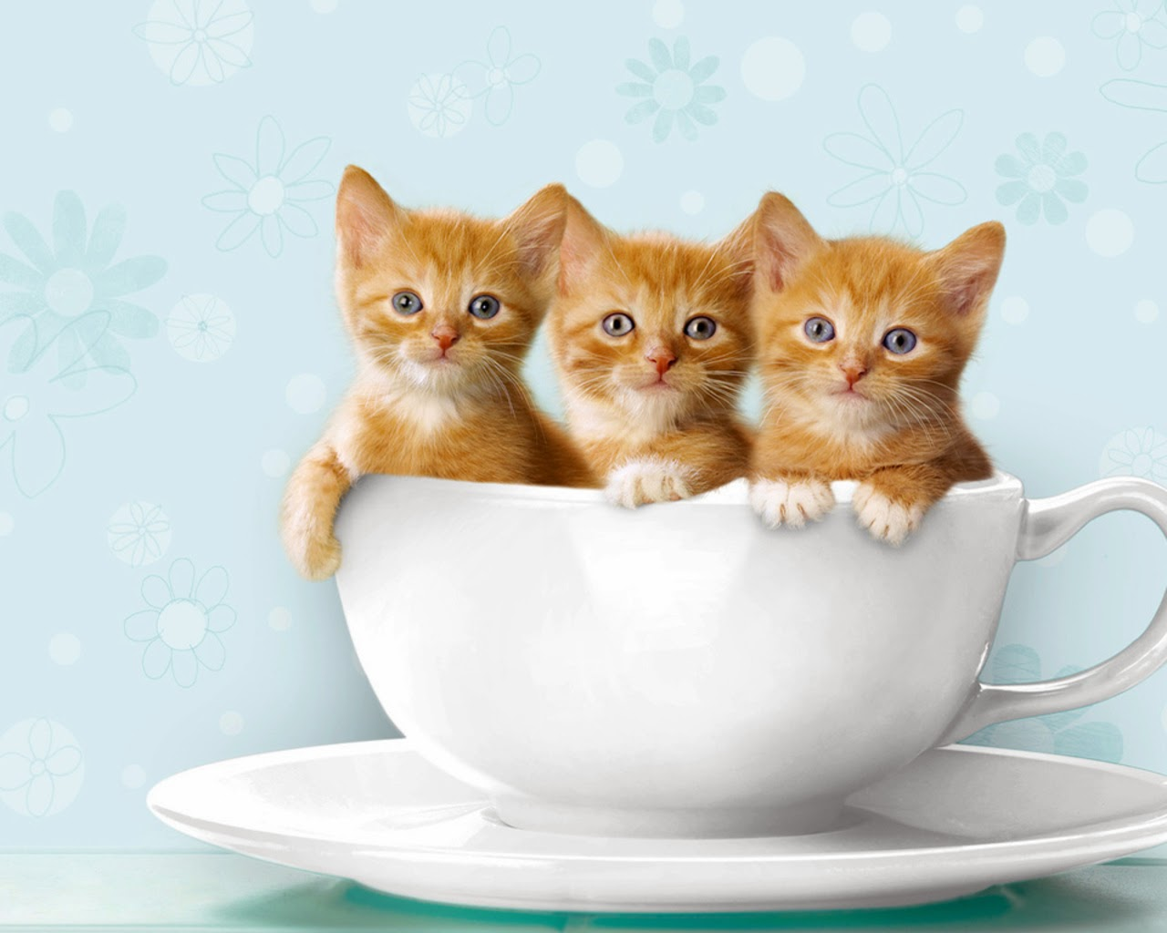 Three little cute cats in tea cup wallpaper cat pictures The three cats