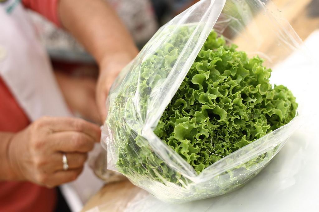 Pasos sencillos para iniciar tu propio cultivo hidrop nico for Como iniciar un vivero en casa