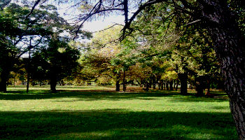 ~Parques y Jardines
