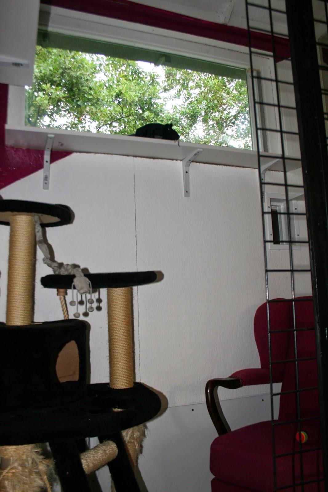 Katten in de wilg: even tussendoor, geen katjesnieuws maar wel ...