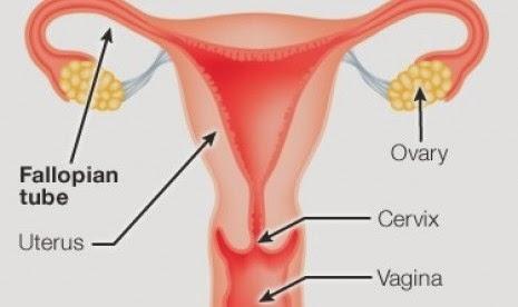 fungsi reproduksi wanita