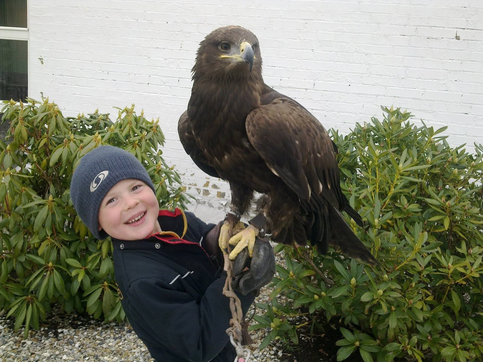 Giant golden eagle a boy and a golden eagle