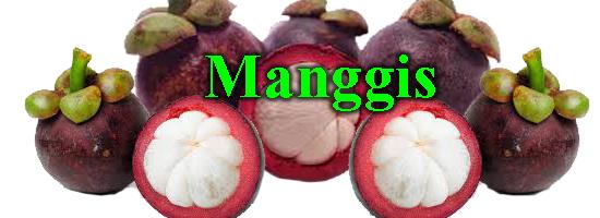 buah manggis, manfaat manggis, cara menanam buah manggis