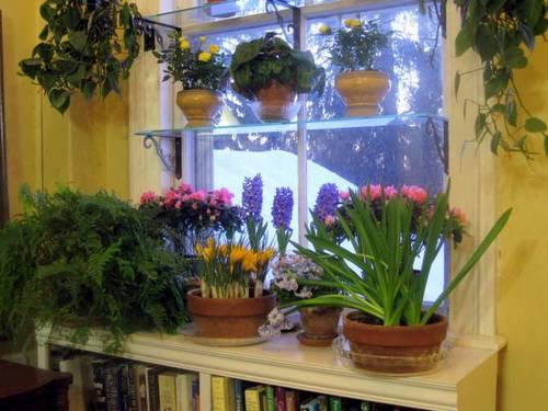 macetas-ventana-sobre-radiador-bulbos-jacintos