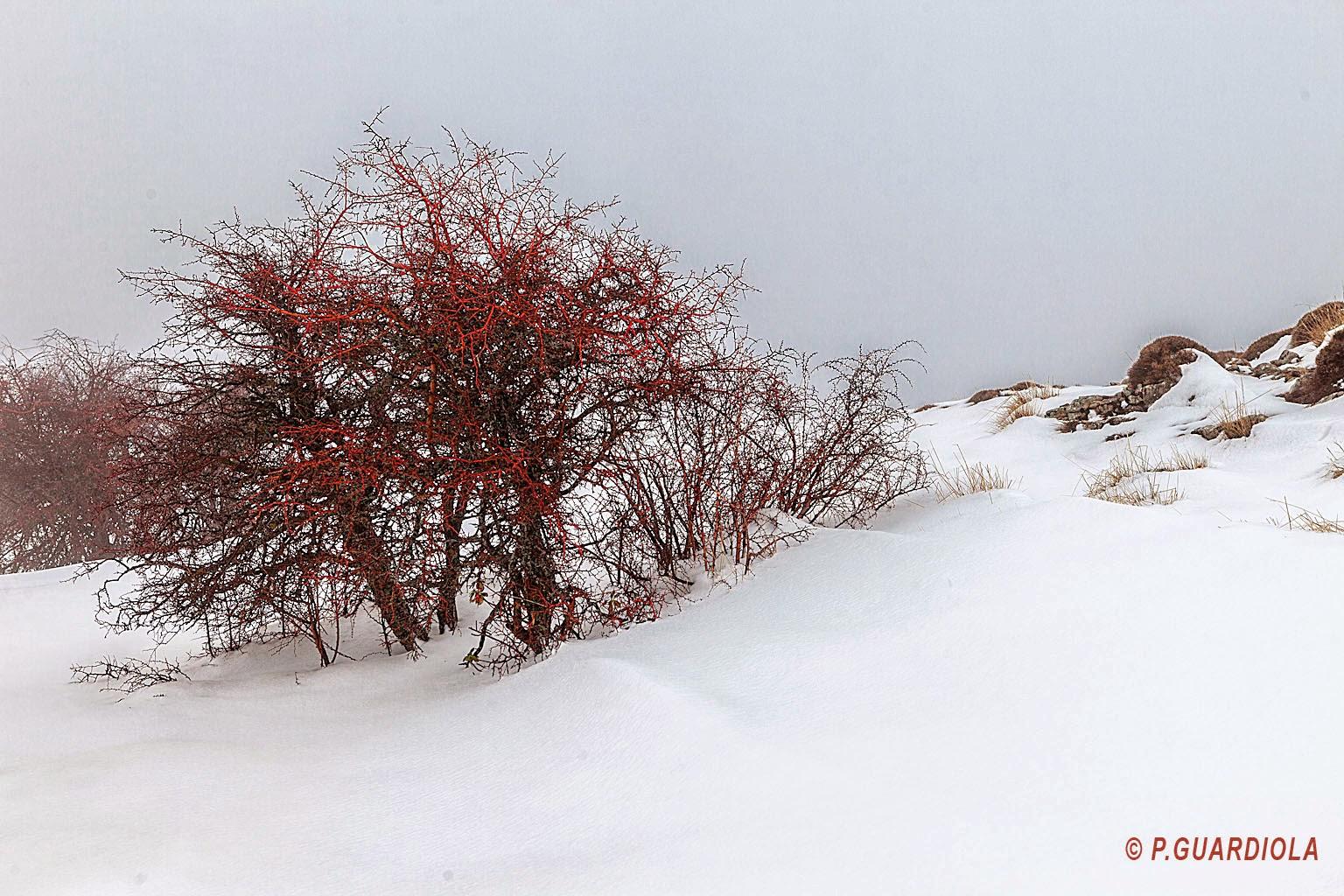 Rojos sobre la nieve