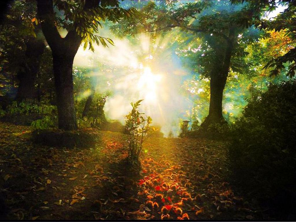 ¿Qué se acerca rumbo al bosque del O3? Strange_forest_light_Wallpaper__yvt2