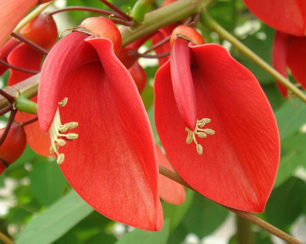 flor nacional argentina: