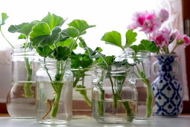 http://4.bp.blogspot.com/-IeHrJuV6X68/VHBYjI3d8rI/AAAAAAAAOlQ/8eciCBJBCBk/s1600/Flowers05.jpg
