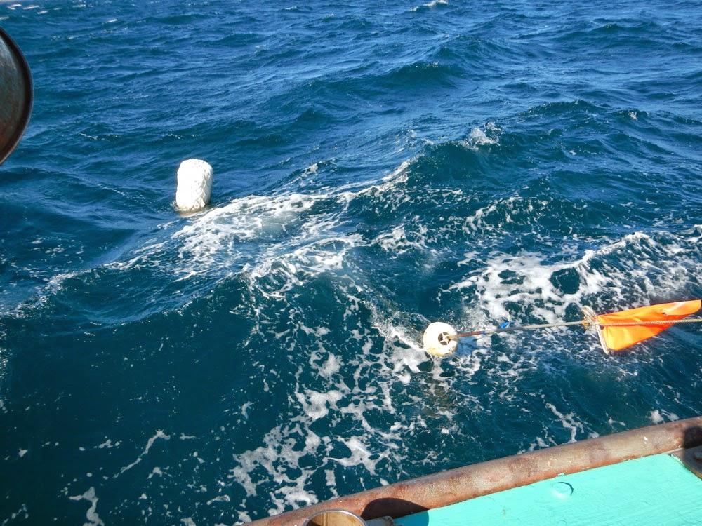 ターゲットのブイ この下に深海へと続くロープが深く深く伸びているのだ