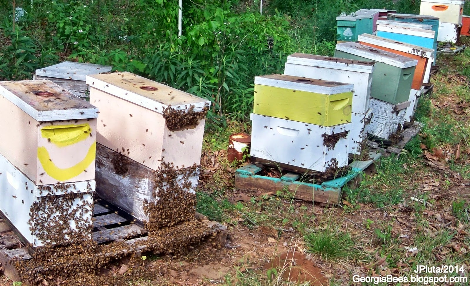 Beekeeping Beekeeper Honey Bees Pollen Wax Candle Propolis