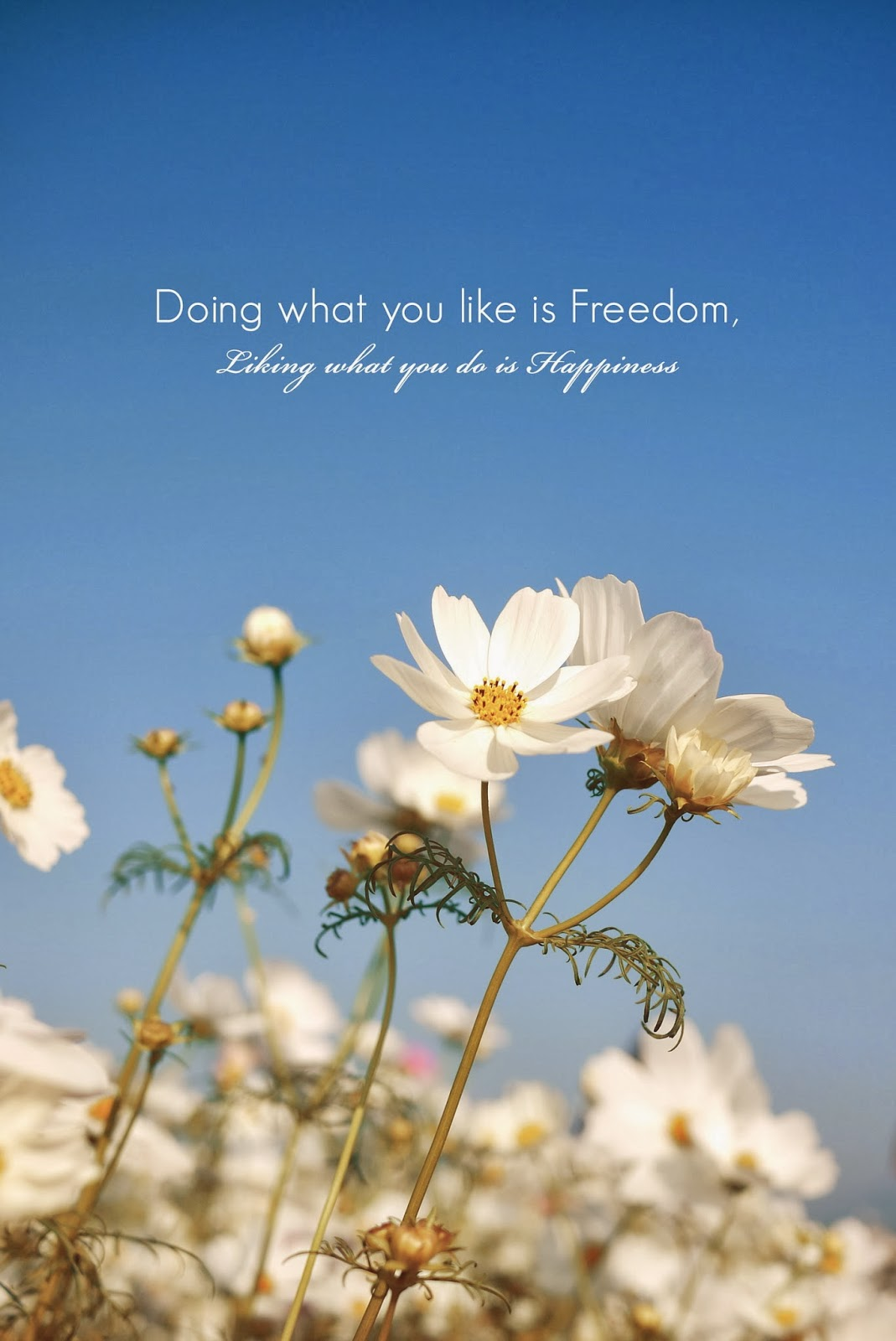 doing what you like is freedom, liking what you do is happiness.