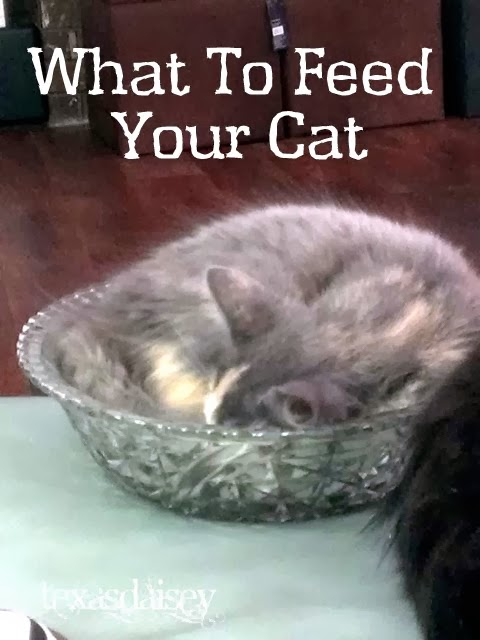 How To feed your cat or kitten