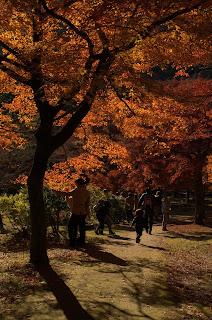 tempat perlancongan,arashiyama