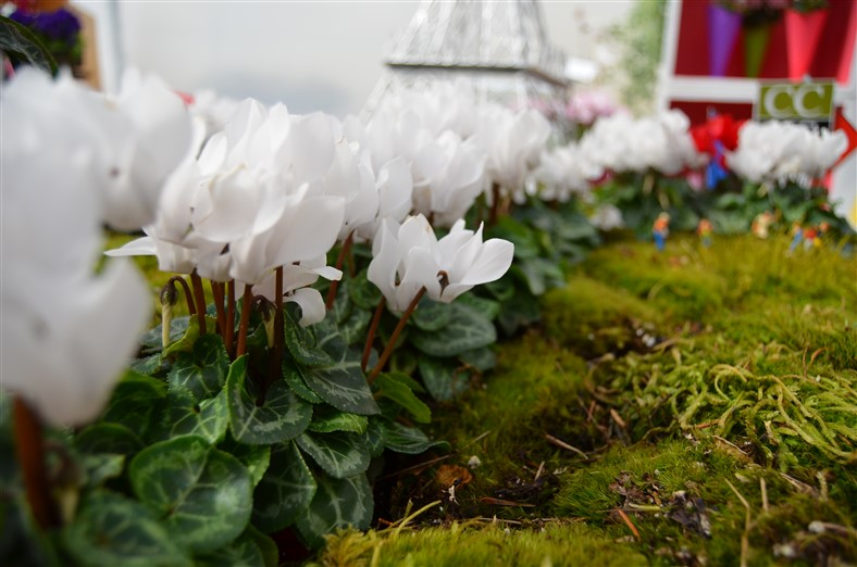 White Cyclamen, Morel, Photo by Amy Renea of A Nest for All Seasons