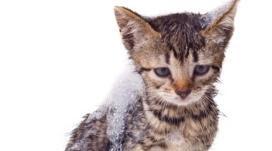 gambar ilustrasi kucing masuk mesin cuci