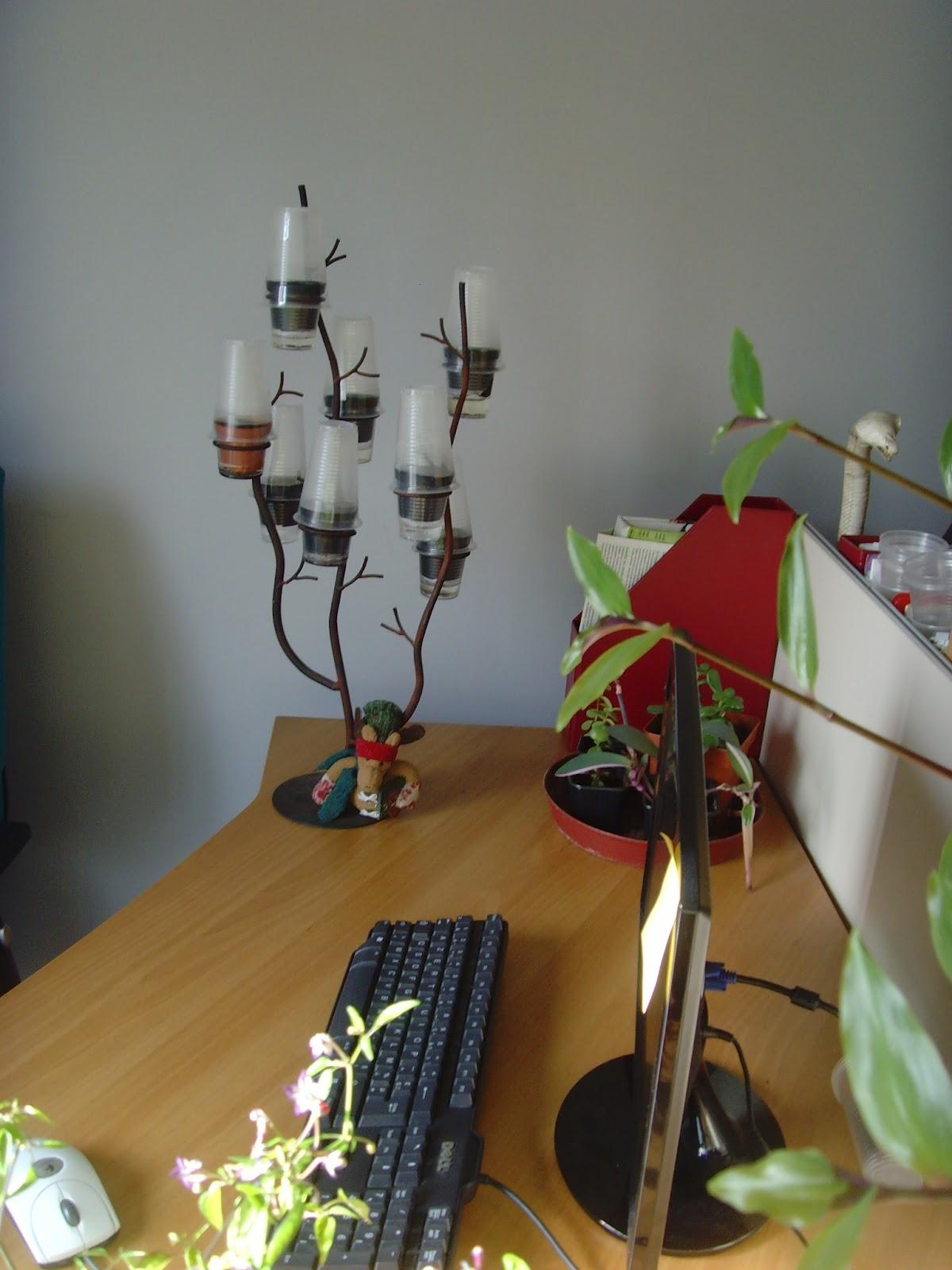 Les piments,le potager, les fleurs et plantes de biosyrphe: idée ...