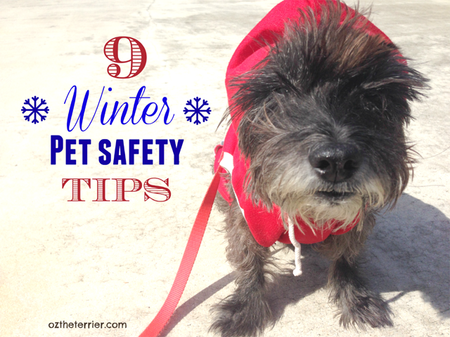 Oz the Terrier's 9 Winter Pet Safety Tips