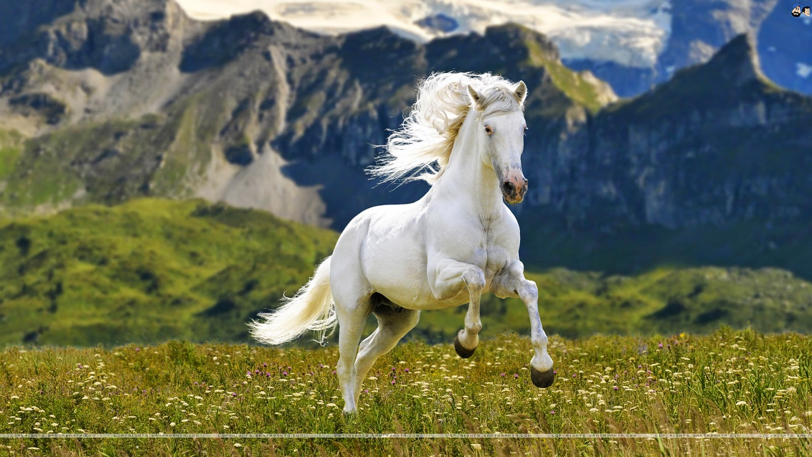 Best wallpaper horse wallpaper for Best nice picture