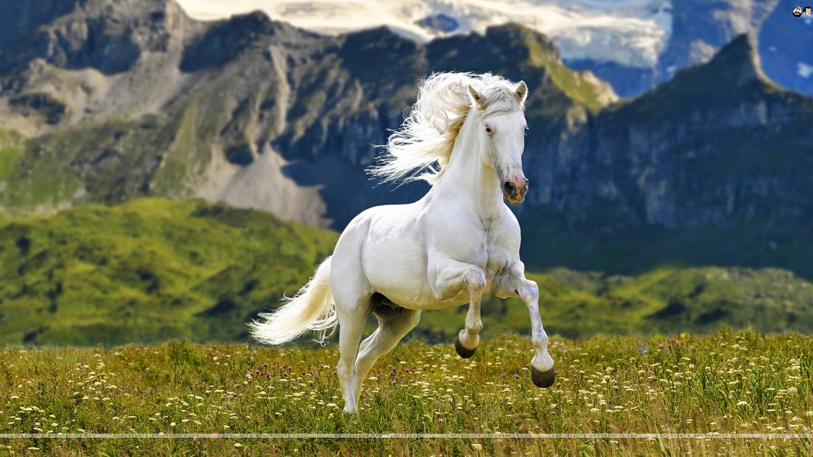 Great   Wallpaper Horse Creative - pretty-white-horse-wallpaper  Photograph_672210.jpg
