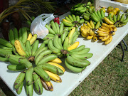 A new trend on Guam is to hold festivals celebrating a specific fruit. (dsc )