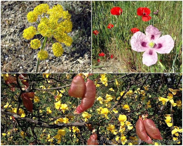 colorido primaveral