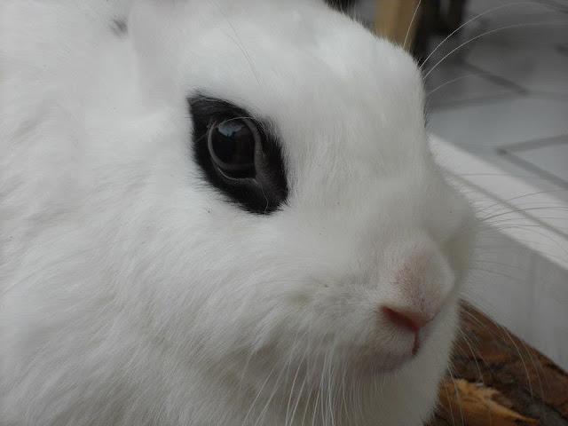 pet bunny in Berlin Germany