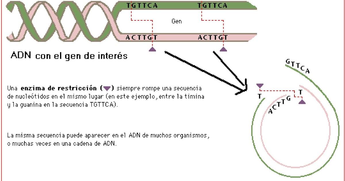 Ciencias para el mundo contempor neo modificaci n for Incompatibilidad en plantas