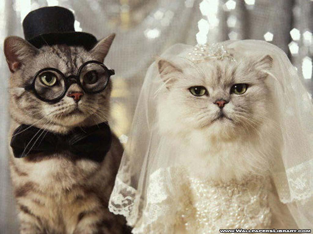 http://4.bp.blogspot.com/-IgRcsNM5NTk/TvMG_79TtQI/AAAAAAAAAF4/oM04LGQV1f0/s1600/funny-cats-wedding-wallpaper.jpg
