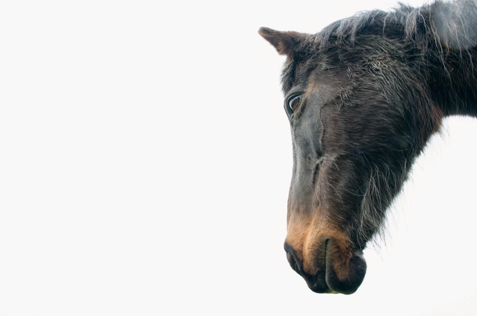 aesthetic fauna // aging mare