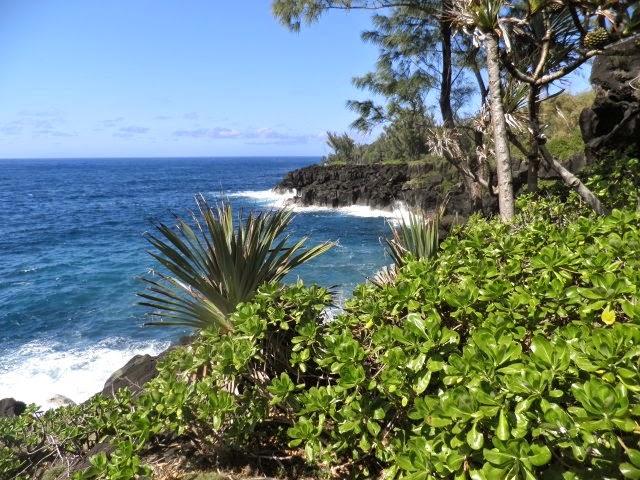 Vagues et vacoas de la Côte Est Réunion