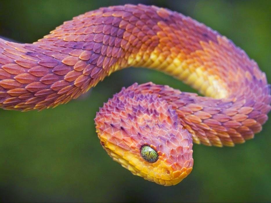 Tải ảnh động vật đẹp nhất thế giới