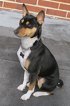 Basenji Dog Rescue