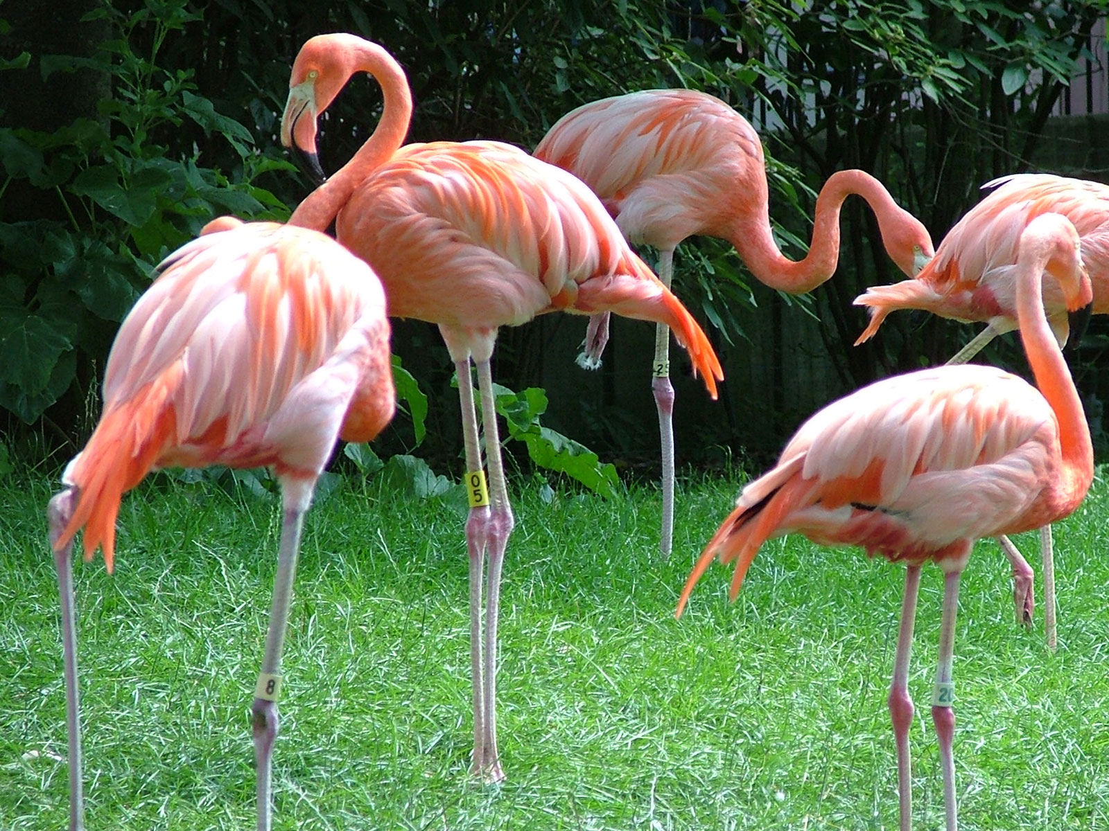 Flamingo Nature Adventure