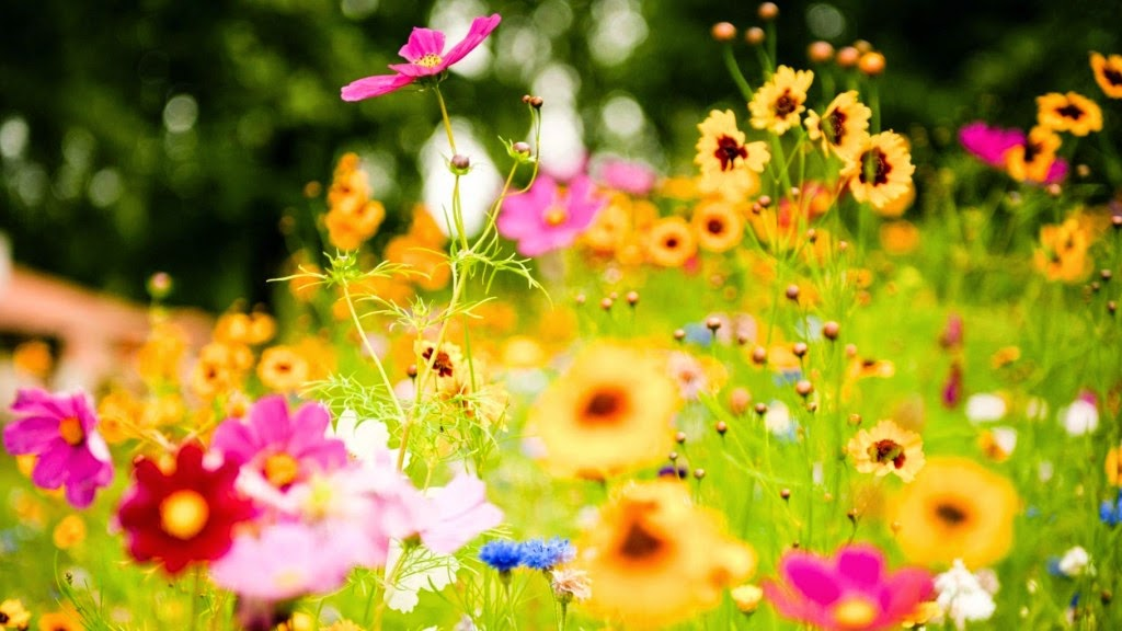 hình nền hoa cỏ mùa xuân
