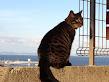 猫と私の散歩道器展