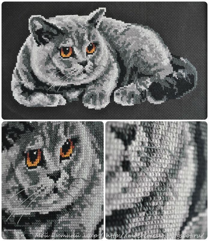 Коты британцы вышивка крестом