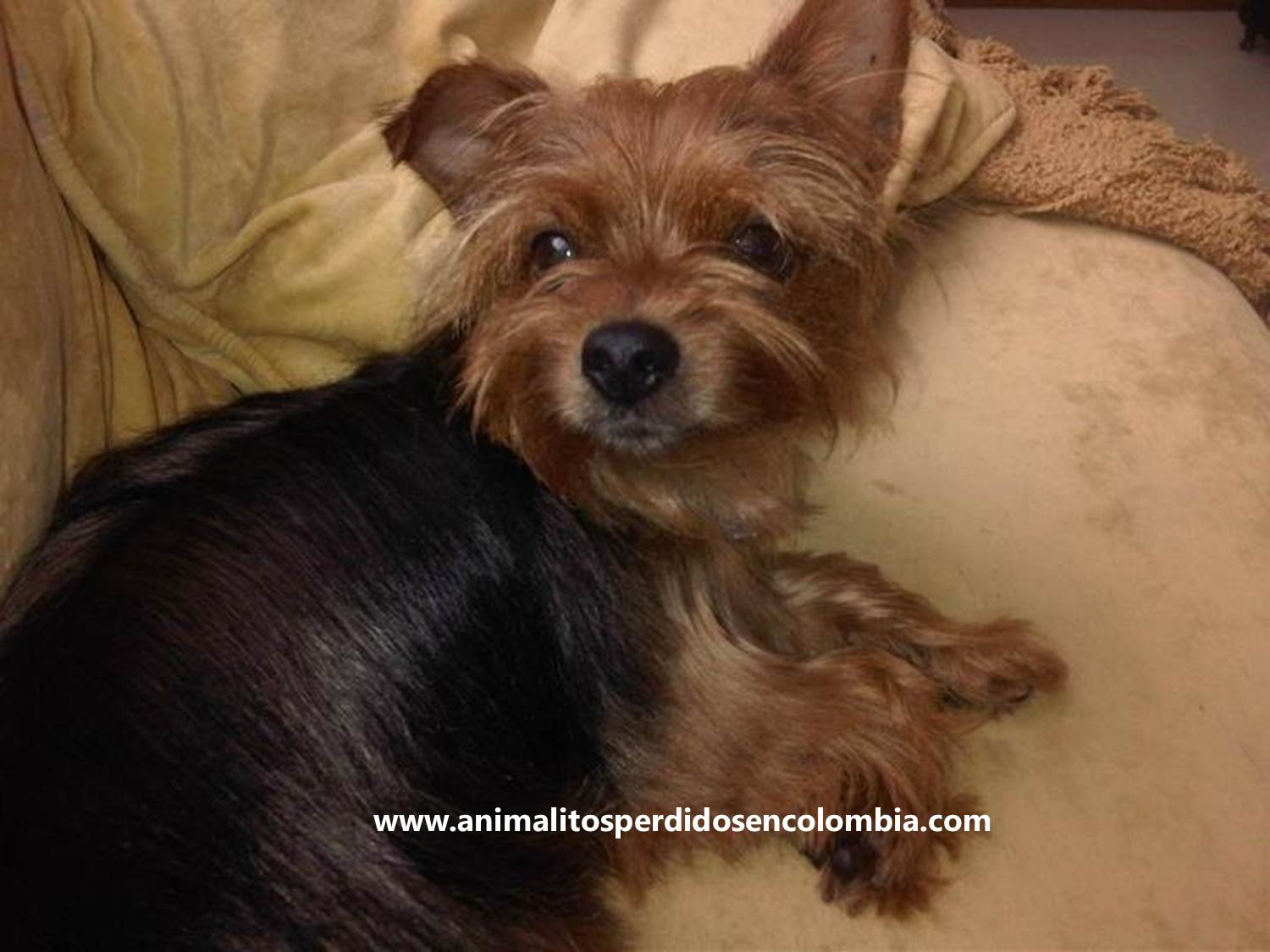 san antonio puppies dogs in our classifieds or advertise your puppies