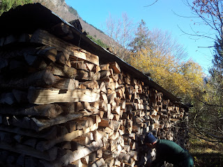 Sustainable energy - wood stacked for drying