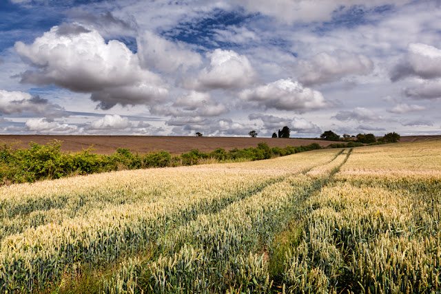 A Cotswolds wheat field under fluffy white clouds by Martyn Ferry Photography
