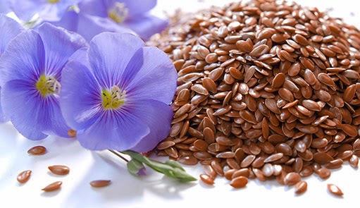 Семена льна полезные свойства